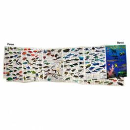 Dépliant papier glacé Découverte de la vie sous-marine Océan Indien et Mer Rouge