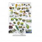 """Plaquette immergeable recto/verso """"Guide d'identification de 240 espèces méditerranéennes (poissons, crustacés, invertébrés"""""""